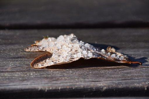 Leaf, Leaves, Oak Leaf, Frost, Ice, Autumn, Winter