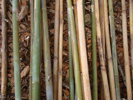 Bamboo, Bamboo Rods, Plant, Natural, Botanical, Organic