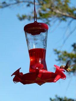 Hummingbird, Feeding Station, Bird, Animal, Canada