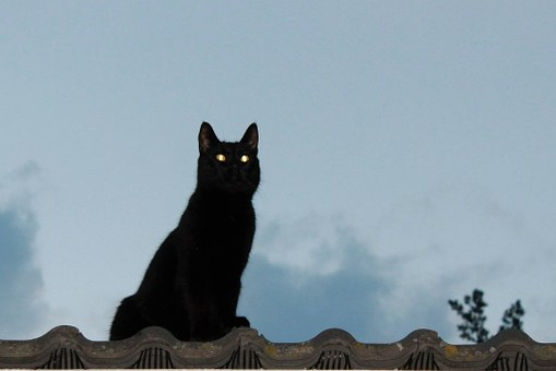 Cat, On The Roof, Animal, Sky