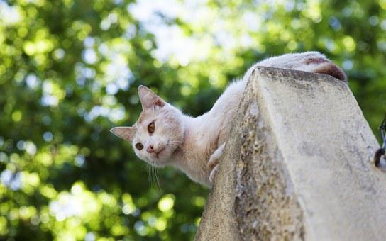 Cat, White, Summer, On The Roof, Wild Cat