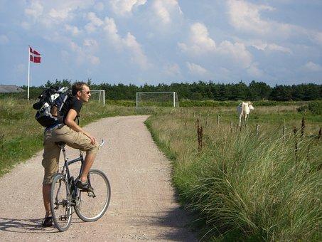 Bike, Meadow, Man, Cow, Denmark, Bike Ride, Cycle