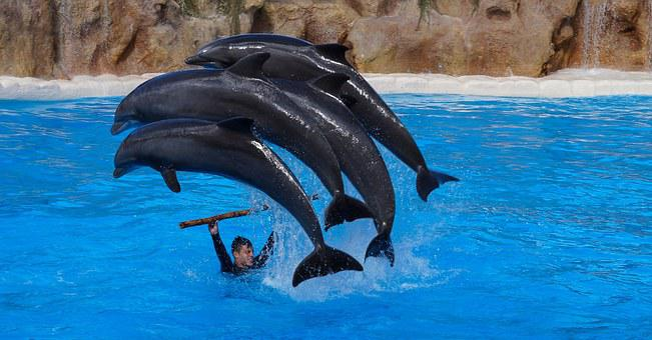 Spain, Canary Islands, Tenerife, Loro Parque, Dolphins