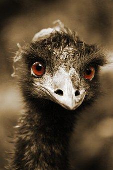 Africa, Animal, Beak, Bird, Curious, Eye, Face, Funny