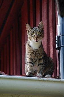 Cat, Feline, Cat On Roof, Animal, Pet, Domestic, Kitten