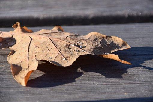 Leaf, Leaves, Autumn, Oak Leaf, Dry, Dry Leaf