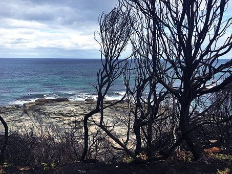 After Bush Fire, Melbourne, Australia, Great Ocean Road