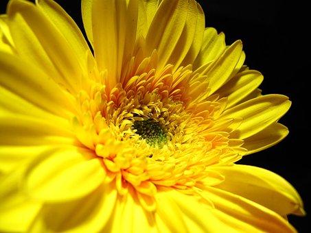 Flower, Yellow, Petals, Yellow Heart, Flora, Plant
