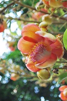 Sal Flower, Flowers, Sal Trees