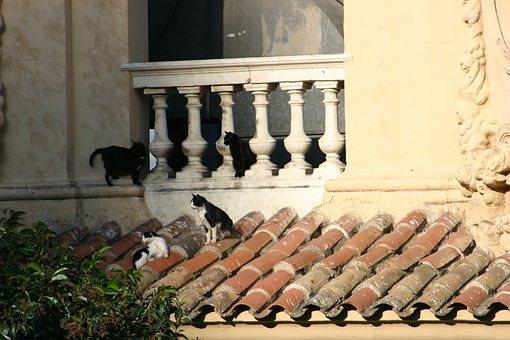 Cat, Roof, Cat On Roof, Balcony, Sitting, Tiles, Feline
