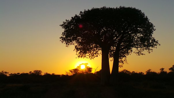 Sunset, Africa, Tree, Limpopo