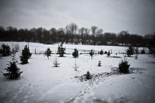 Snow, Winter, Tiltshift, Cold, Landscape, Wilderness