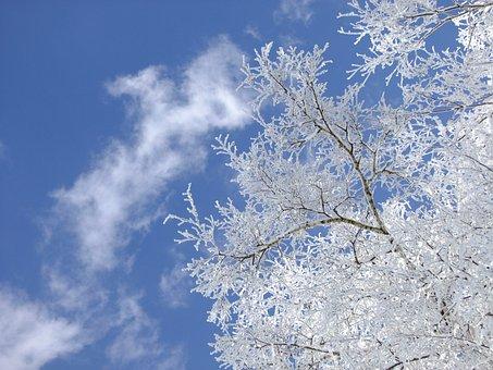 Winter, Birch, Tree, Ripe, Hoarfrost, Frost, Sky
