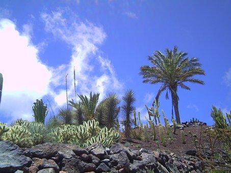 Fuerteventura, Palm, Sun, Air, Sky