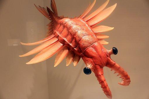 Anomalocaris, Prehistoric, Animals, Predator, Marine