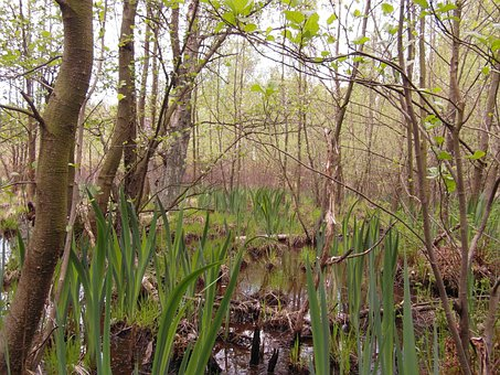 Moor, Light, Spring, May, Away, Hiking, Recovery, Swamp