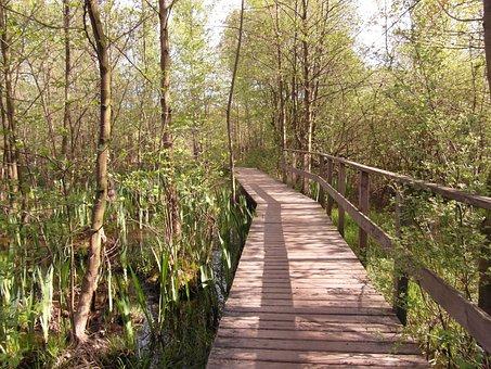 Moor, Bridge, Web, Light, Spring, May, Away, Hiking