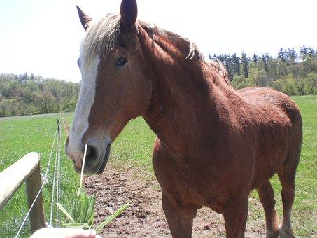 Horse, Nature, Countryside, Horses, Animal, Stallion