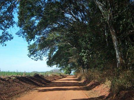 Dirt Road, Clod Soil Road, Farm, Trees