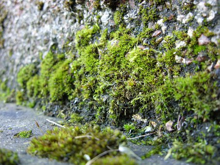 Moss, Mosses, Growing, Plant, Green, Stone Wall