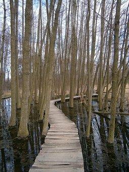 Trees, Lane, Footbridge, Water, Swamp