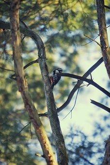 Forest, Spruce, Needles, Sky, Nature, Birds, Bird