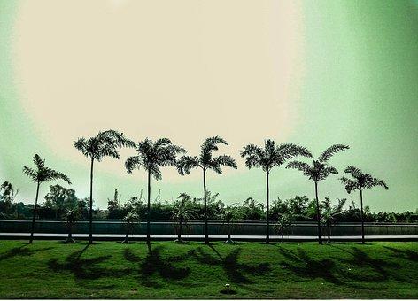 Trees, Sun, Natural, Nature, Landscape, Sky, Sunlight
