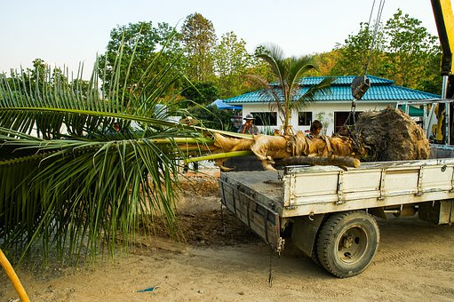Palm, Transport, Trailers, Coconut Tree