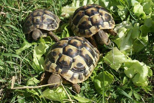 Turtle, Greek Turtles, Turtles, Animal, Zoo, Animals