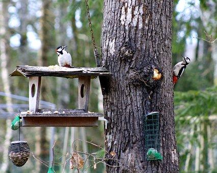 Woodpeckers, Woodpeckers Feeding