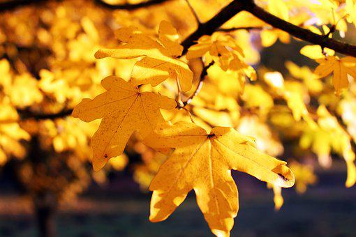 Leaves, Autumn, Nature, Leaf, October, Time Of Year