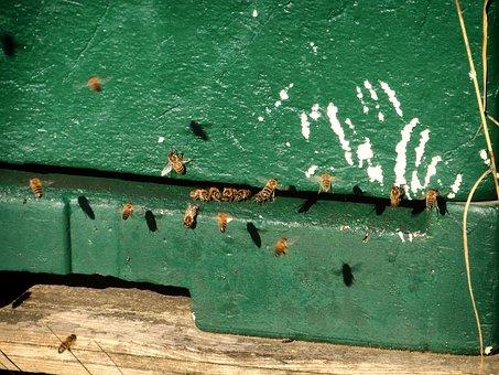 Bees, Bees Box, Flight