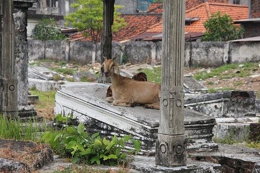 Surabaya, Goat, Cemetery