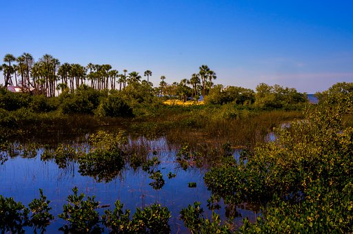 Pine Island, Florida, Marshlands, Palm Trees, Tropics