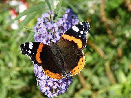 Butterfly, Floriade, Flower