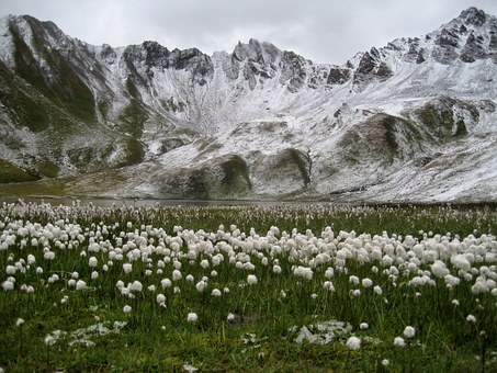 Mountain, Snow, Tignes, France, White, Flowers
