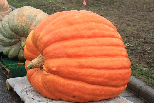 Pumpkin, Huge Pumpkin, Harvest, Orange, Autumn