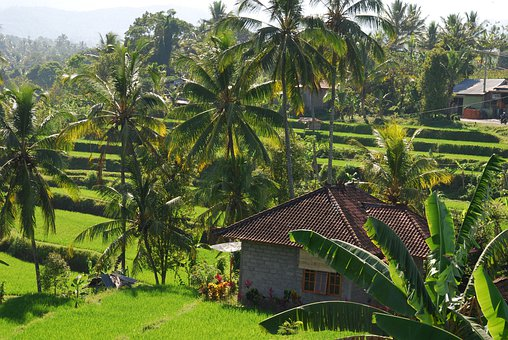 Bali, Paddy, Green, Nature, Hut, Landscape