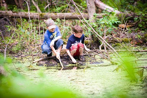 Water, Stewardship, Nature, Children, Swamp, Curiosity