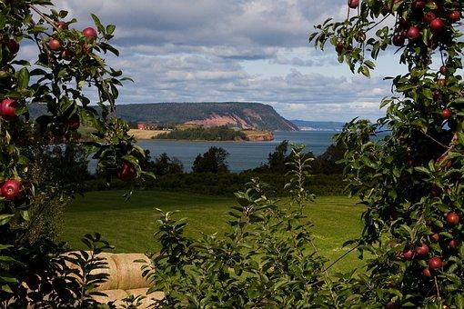 Blomidon, Nova Scotia, Apples, Orchard, Fall, Sky