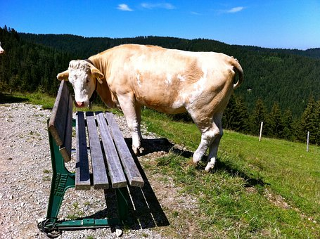 Schliersee Mountains, Bank, Cow, Summer, Sun, Mountains