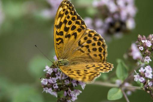 Butterfly, Flower, Insect, Nature, Summer, Blossom