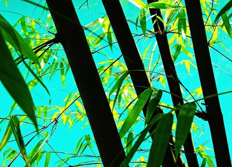 Bamboo, Lake, Turquoise Water, Nature, Tranquil