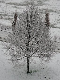 Tree, Snow, White, Cold, Winter, Nature, Besançon
