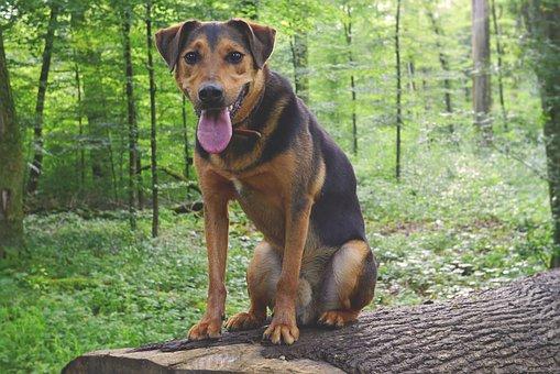 Dog, Hundeportrait, Hybrid, Mixed Breed Dog