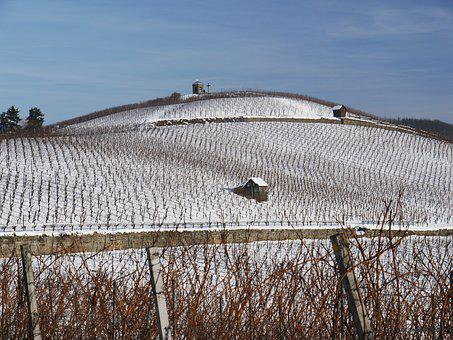 Vineyard, Winter, Snow, Wintry, Dream Day, White, Cold