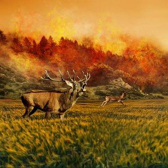 Hirsch, Roe Deer, Forest, Brand, Forest Fire, Fire