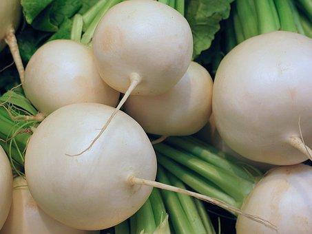Radish, Vegetables, Food, Healthy, Eat, Garden, White