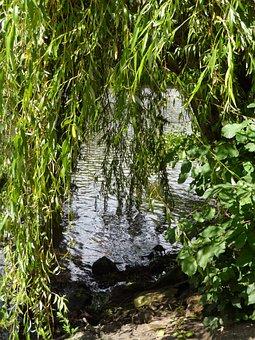 Pasture, River, Bank, Idyll, Grove, Shore Rain, Cozy