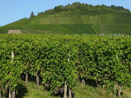 Kappel Mountain, Wine, Fellbach, Vines, Slope, Grapes